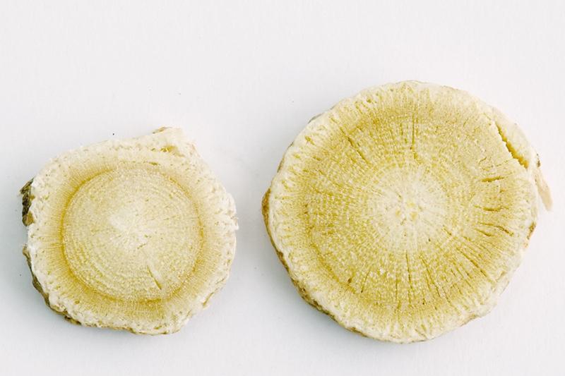 Plante Astragale : Réductions - Plantes - Vertus | Pourquoi faire une cure ?